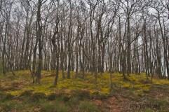 Die Wälder und Hügel in der Eifel gefallen mir bisher ausserordentlich gut. Viel habe ich ja noch nicht gesehen. In einigen Wochen kehre ich wieder.