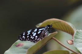 Butterfly on leaves.
