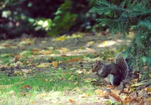 Squirell in Carl Schurtz Park New York