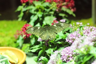 Butterfly exhibition at Museum of National History