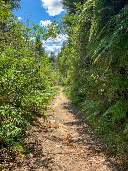 Narrow gravel trail, with dense vegetation lining the trail and fern trees encroaching on the trail space