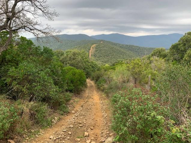 Forging my way through the forest and hills close to Castiglione della Pescaia