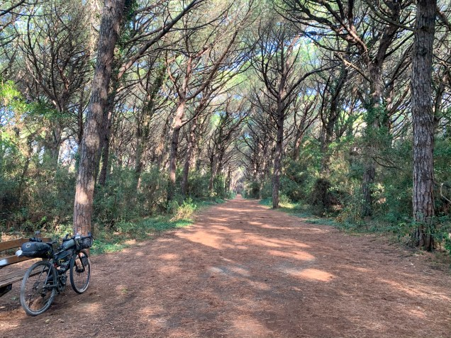 Some idyllic riding along coastal forest trails, a stone's throw from the beaches