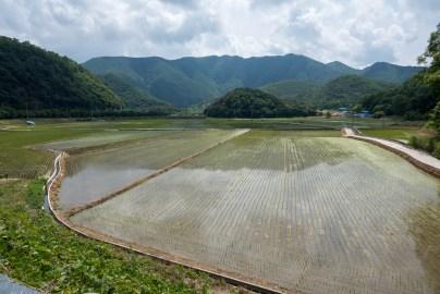 Rice paddies along the path