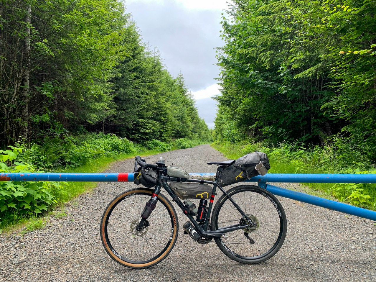 gravel bike leaning against a metal gate on a forest gravel road