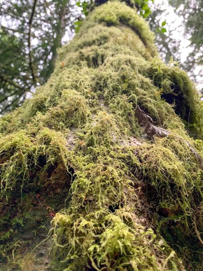 moss-covered tree bark