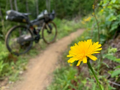 a wildflower next to the trail