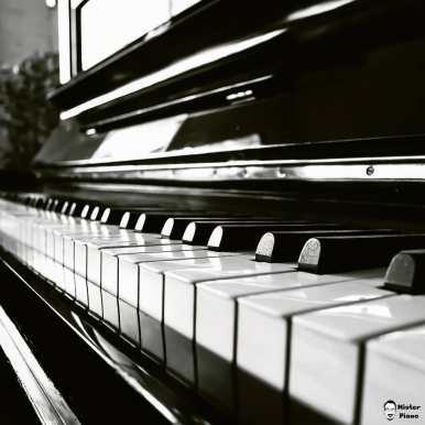 Ebony Keys · · · · · #piano #klavier #klavierspielen #klaviermusik #pianist #music #pianoman #klavierliebe #pianolove #pianomusic #pianoforte #musik #klavierstimmer #klavierbauer #classicalpiano #pianoplayer #pianolife #pianotuner #meinklavierstehthier #pianolover #grandpiano #pianopiano #pianogirl #pianokeys #pianogram #pianoboy #pianos #pianohands #pianoart #instapiano