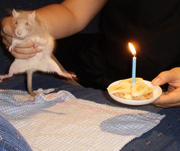Råttis fyller 1 år