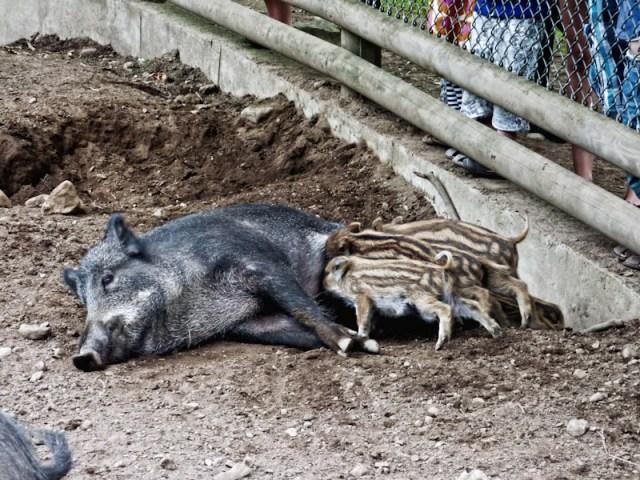 Skånes djurparkr