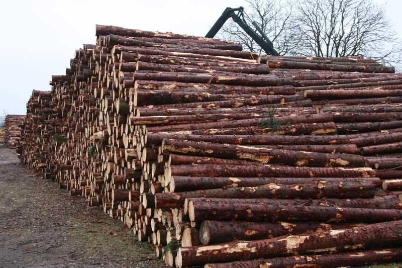 bomen, hout,