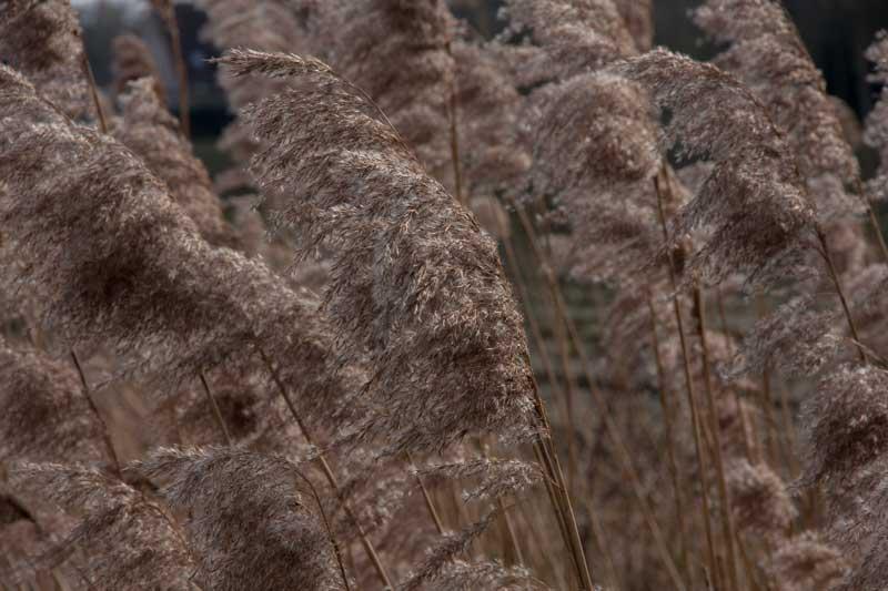 natuur, februari, hoog gras