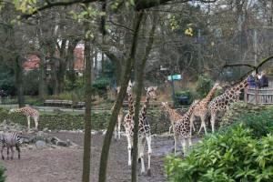 Noorder-Dierenpark-Savanne-2012