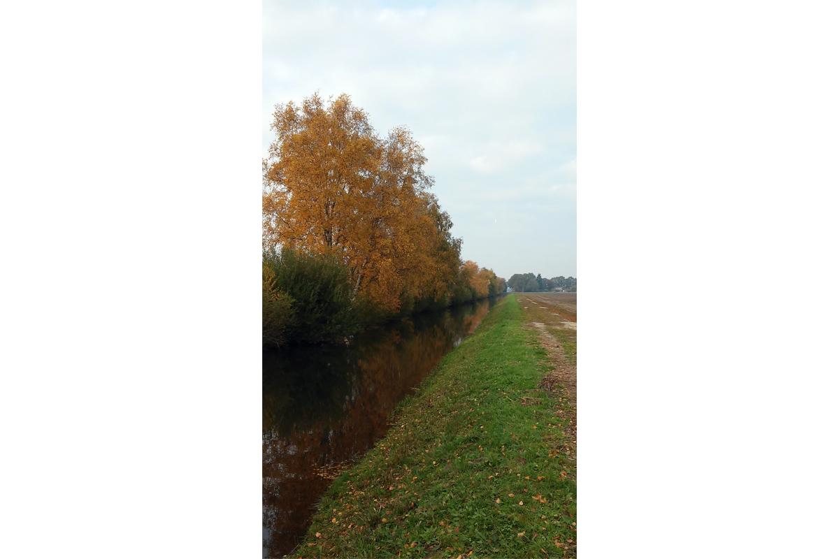 Molenwijk 2018