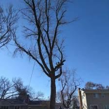 tree-service-3