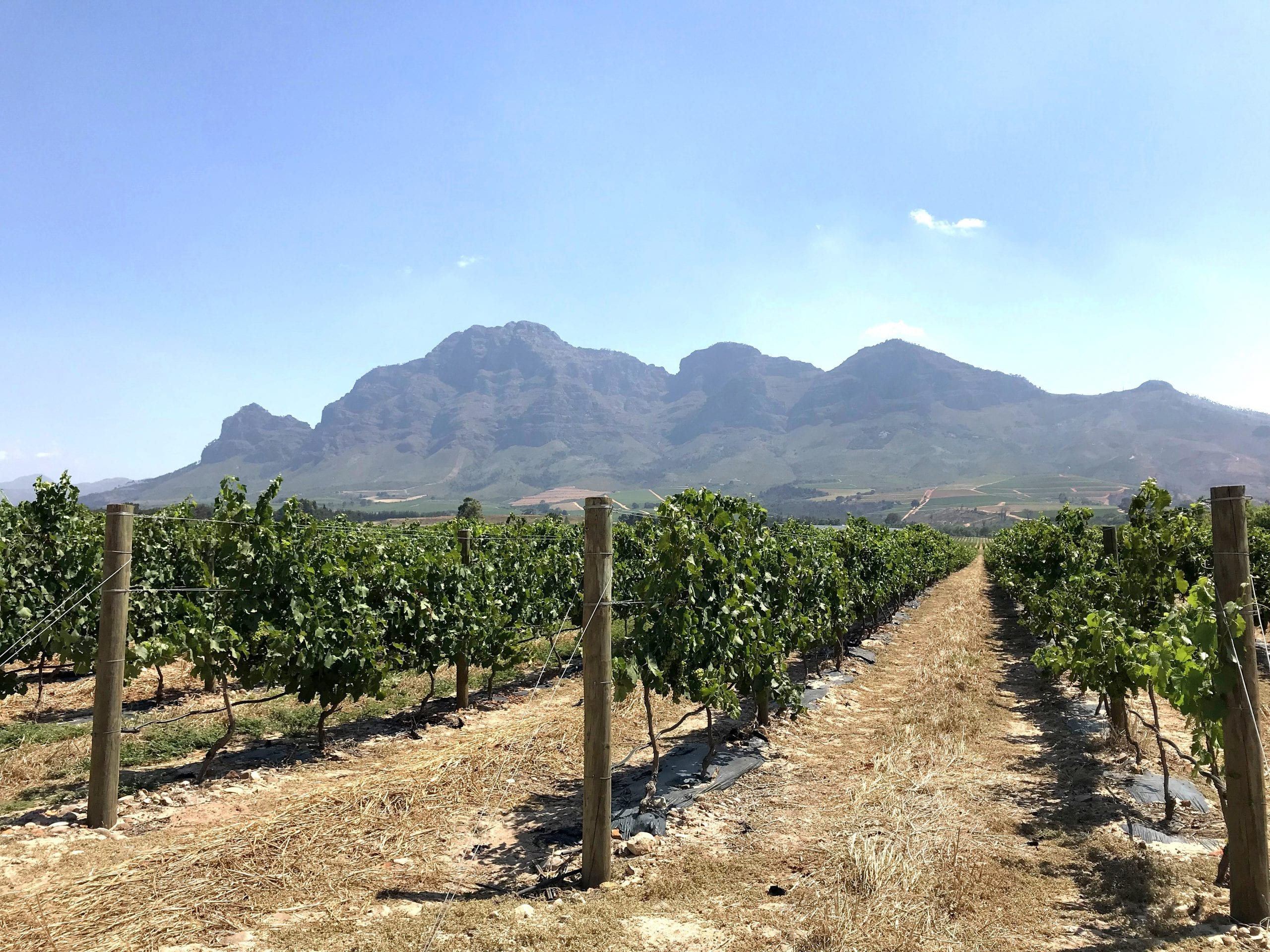 Stellenbosch Highlights