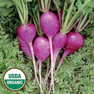 Radish Plum Purple