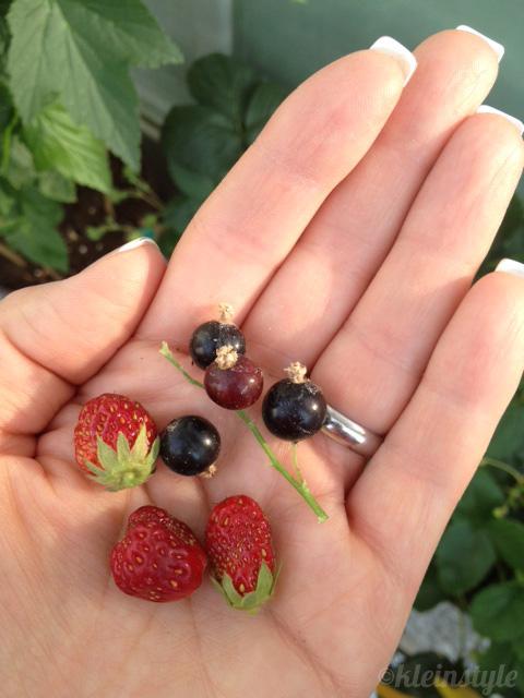 kleinstyle's erdbeeren und johannisbeeren