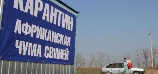 В Волгоградской области принимают меры для локализации АЧС