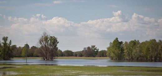 В Волгоградской области открывается весенняя охота на пернатых