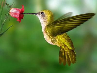 Красивые картинки колибри на рабочий стол (34 фото ...