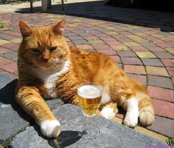 Прикольные картинки котов и кошек с надписями (24 фото)