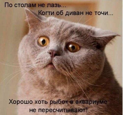 Прикольные картинки котов и кошек с надписями 24 фото