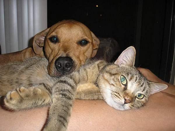 Прикольные картинки - собаки и кошки (40 фото ...