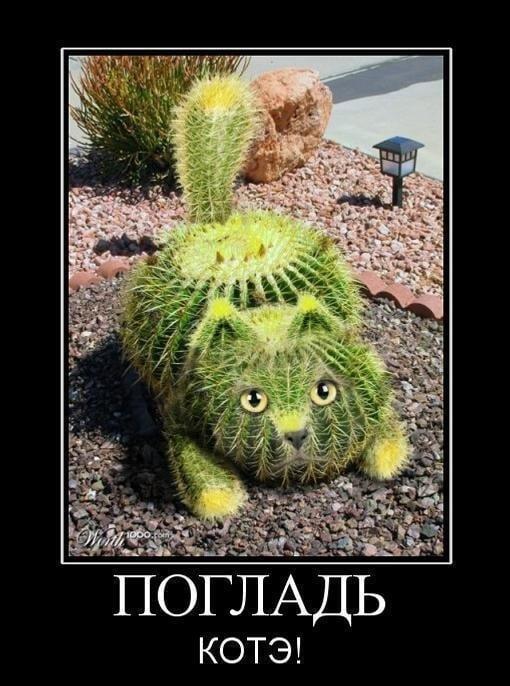 Прикольные картинки про забавных котов (50 фото ...