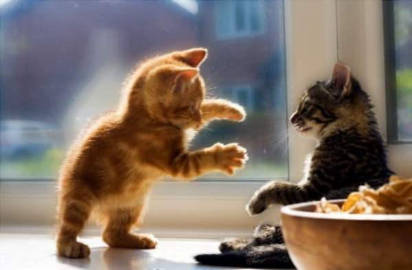 Милые котята - прикольные и смешные картинки (15 фото ...
