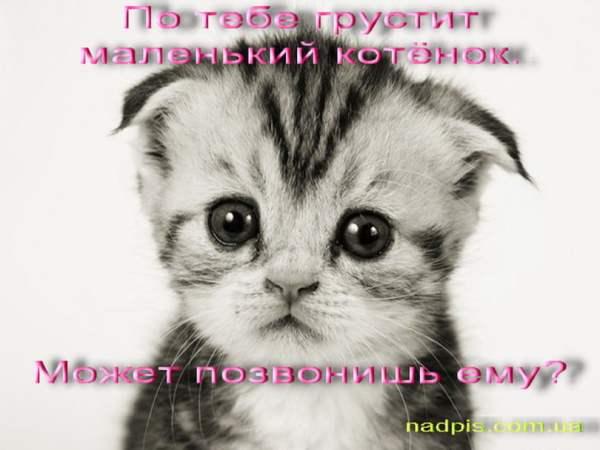 Прикольные картинки про котят с надписями (32 фото ...