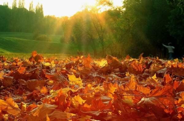 Картинки осень + любовь (30 фото) • Прикольные картинки и ...