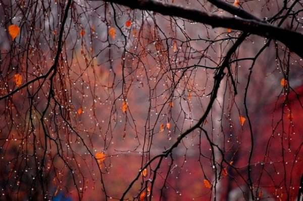 Красивые картинки осень за окном (30 фото)