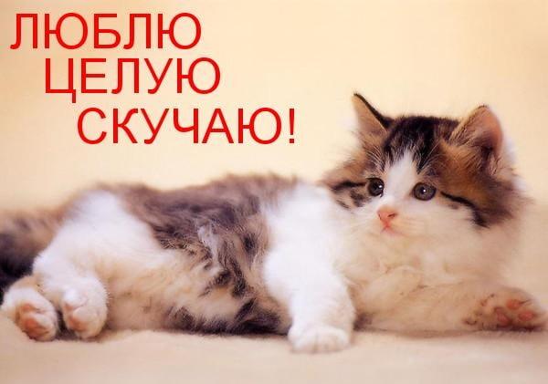 Милые картинки Люблю, целую, обнимаю! (30 фото)