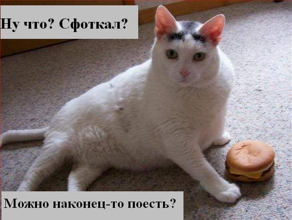 Прикольные картинки про кошек с надписью (30 фото ...