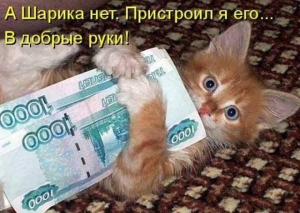 Смешные картинки животных с надписью (30 фото ...