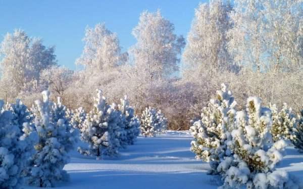 Зима - красивые картинки (50 фото)
