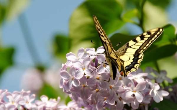 Весна - красивые картинки (50 фото) • Прикольные картинки ...