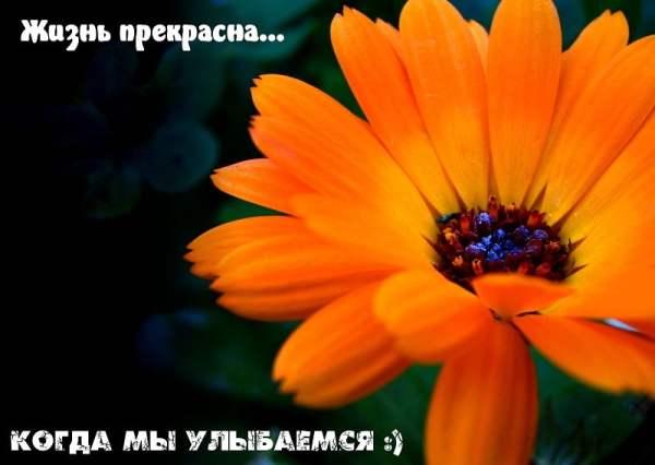 Красивые картинки со смыслом и надписью (40 фото ...