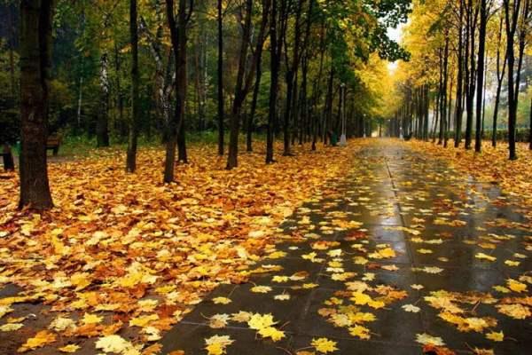 Дождь - красивые картинки (40 открыток) • Прикольные ...