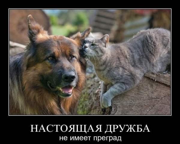 Красивые картинки про дружбу (45 фото) • Прикольные ...