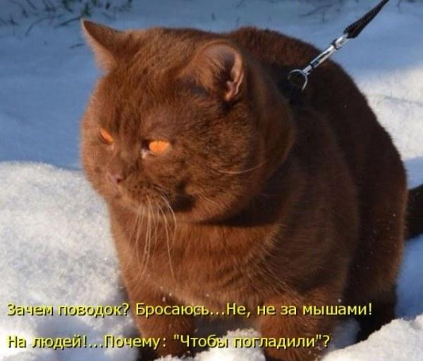 Прикольные картинки про котов (50 фото) • Прикольные ...