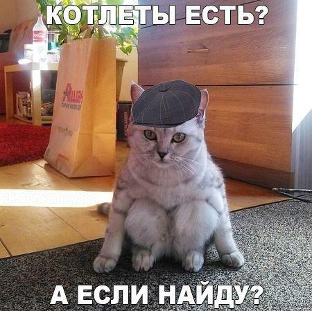 Смешные картинки про котов с надписью (50 фото ...