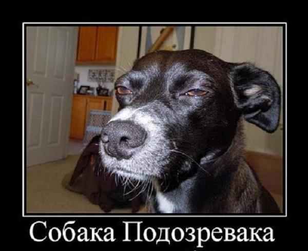 Смешные картинки про собак с надписью (50 фото ...