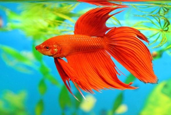 Рыбы - красивые картинки (50 фото) • Прикольные картинки и ...