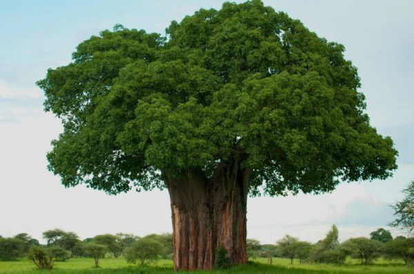 Деревья - красивые картинки (50 фото) • Прикольные ...
