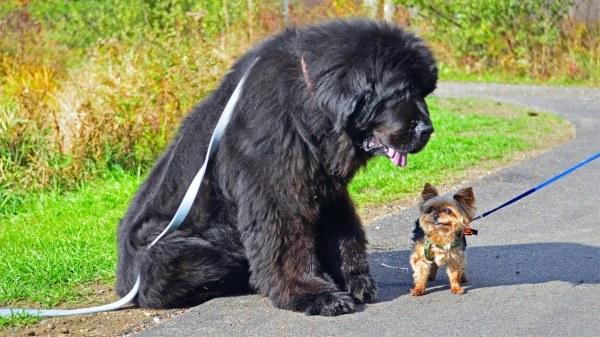 Собаки - красивые картинки (40 фото) • Прикольные картинки ...