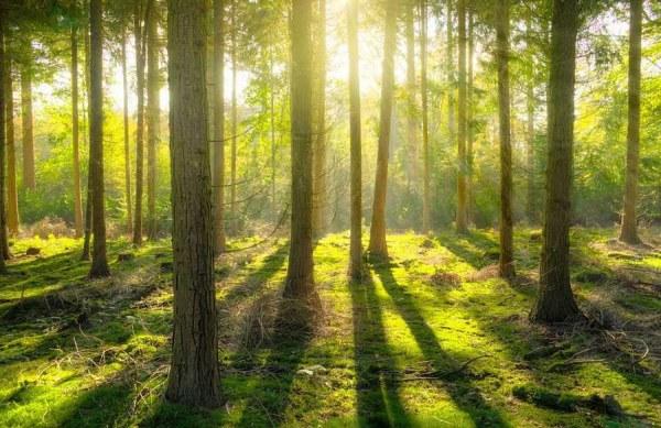 Лес - красивые картинки (40 фото) • Прикольные картинки и ...
