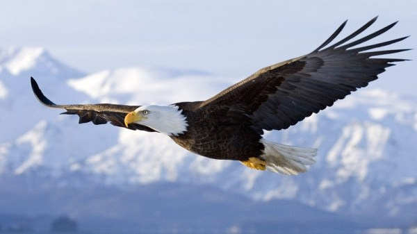 Орел - красивые картинки (40 фото) • Прикольные картинки и ...