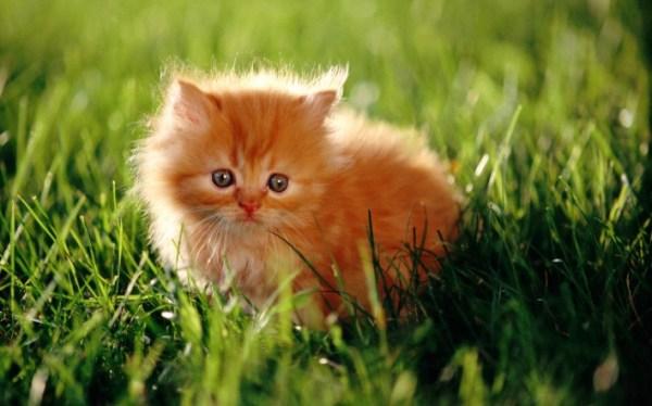 Няшные котики - милые картинки (46 фото)